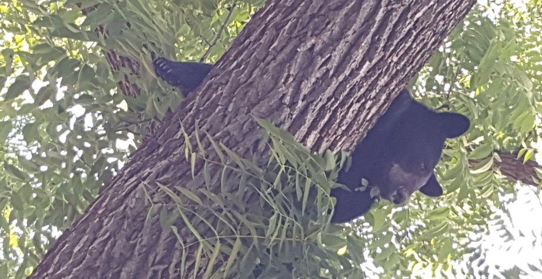 Police warn residents of Port Perry to stay indoors as black bear on the loose
