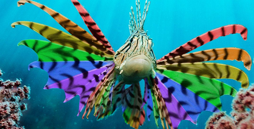 Celebrate Pride Season at Vancouver Aquarium's After Hours (CONTEST)