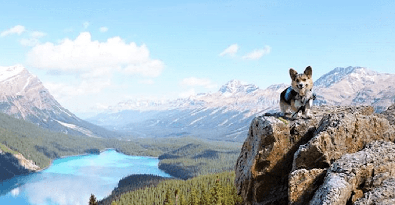 Meet Lilo: An Alberta corgi who goes on some serious adventures (PHOTOS)