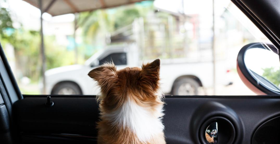 CPS issues annual warning against leaving kids, animals in cars this summer