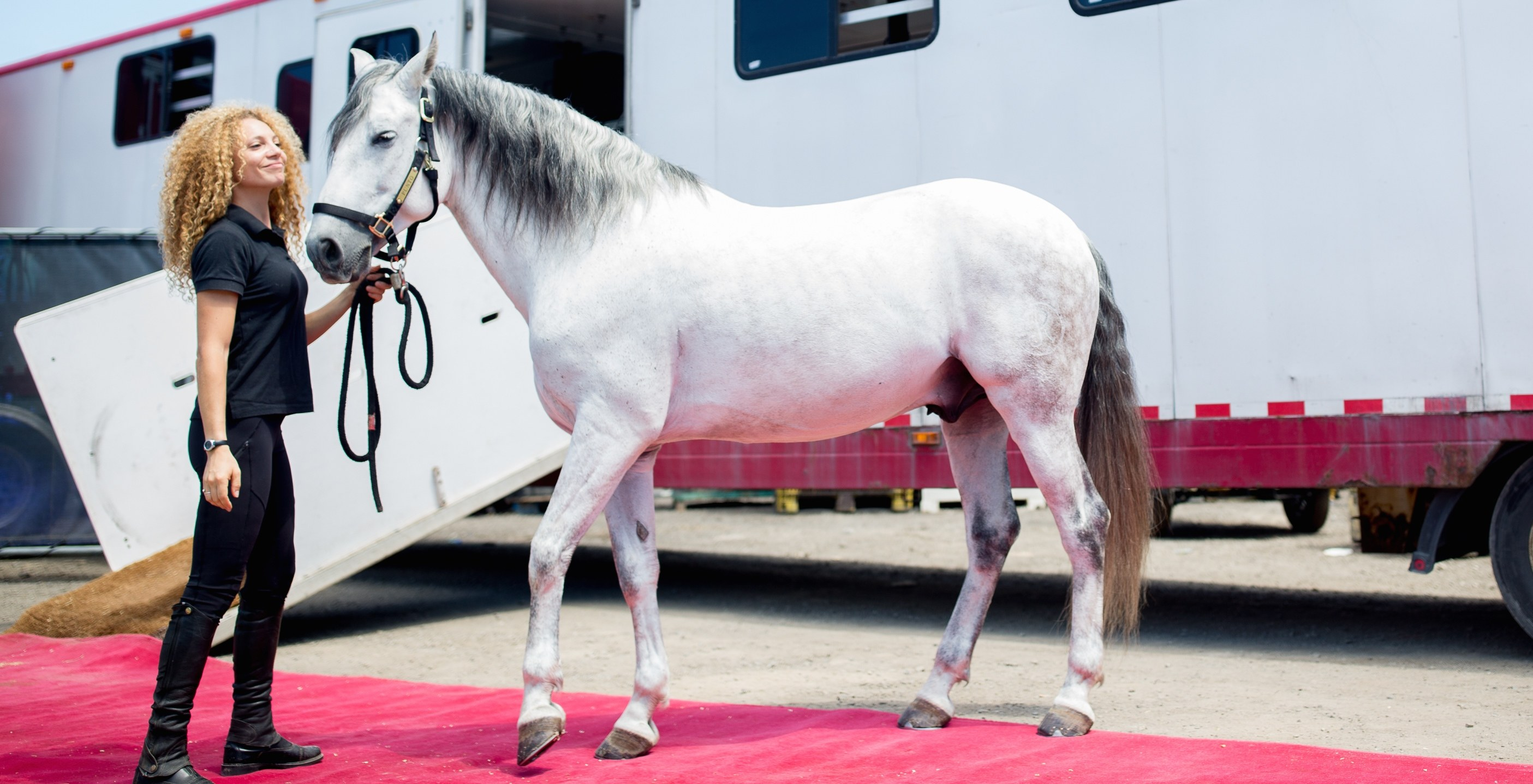 Cavalia horses trot onto the red carpet of Montreal's biggest equestrian stage
