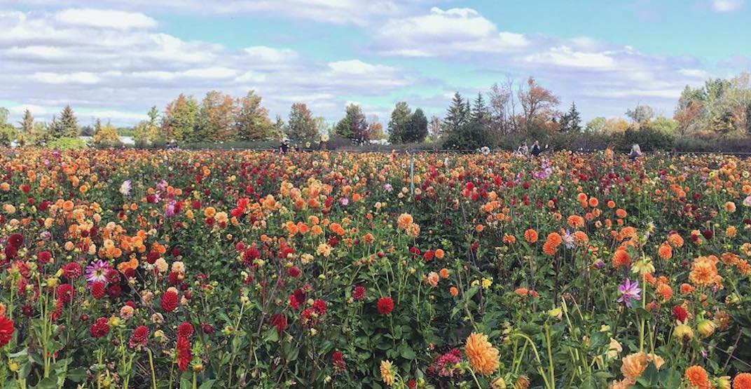 5 picturesque flower farms to visit near Toronto this summer