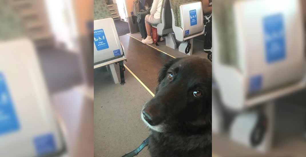 Dog rides GO train from Scarborough to Union Station all by himself (PHOTOS)