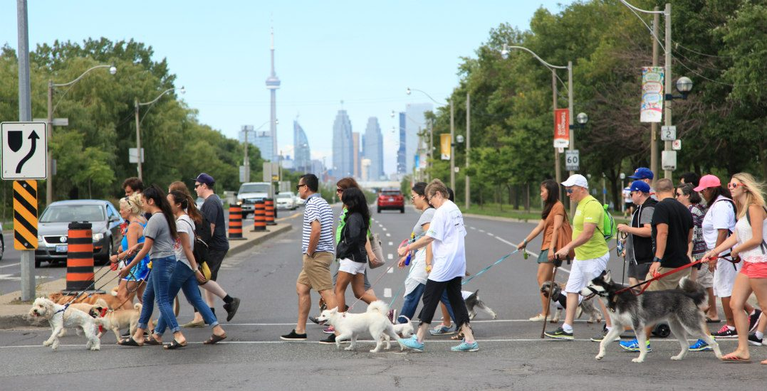 The ultimate doggy day out is happening in Toronto (and it's FREE to attend)