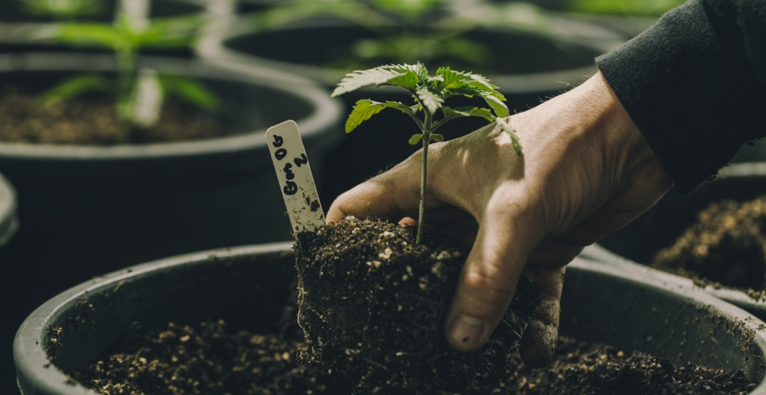Here's what you need to know about a micro-cultivation