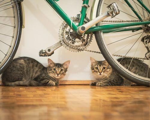 Sansa and Arya, courtesy instagram.com/ramblinghoundphoto/