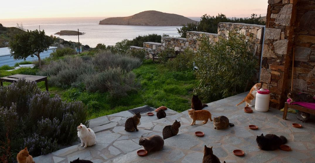 Stunning Greek island wants to pay someone to run its cat sanctuary (PHOTOS)