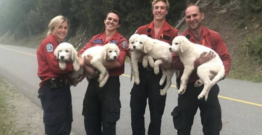 BC firefighters save group of lost puppies from wildfire