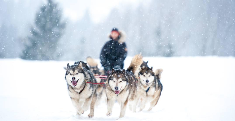 Disney hosting casting call near Calgary for dog sled adventure film