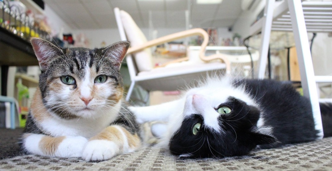 Toronto cat cafe to reopen but doubles-down on anti-wheelchair position