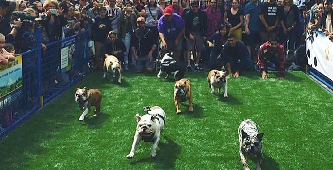 The West Coast's largest pet festival is coming to Yaletown this weekend