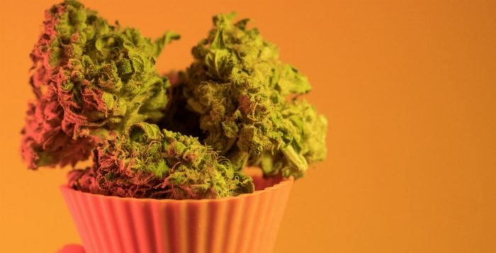 Cannabusters myth #15: Eating raw cannabis can get you high