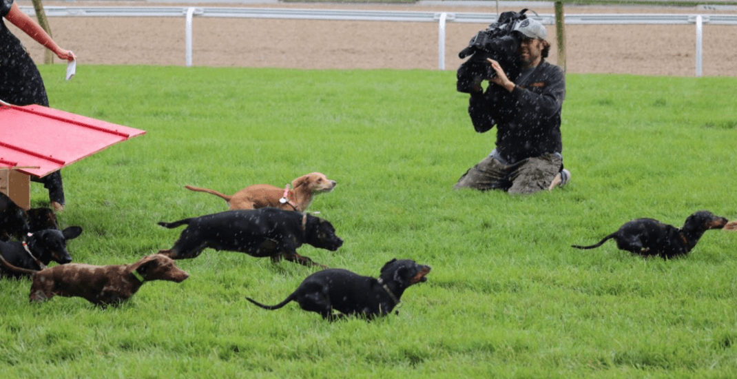 This is what Toronto's first Dachshund Derby looked like (PHOTOS)