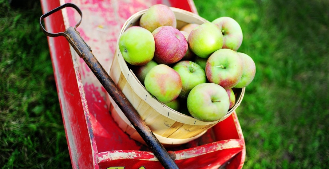 Where to go apple picking near Toronto this fall (MAP)