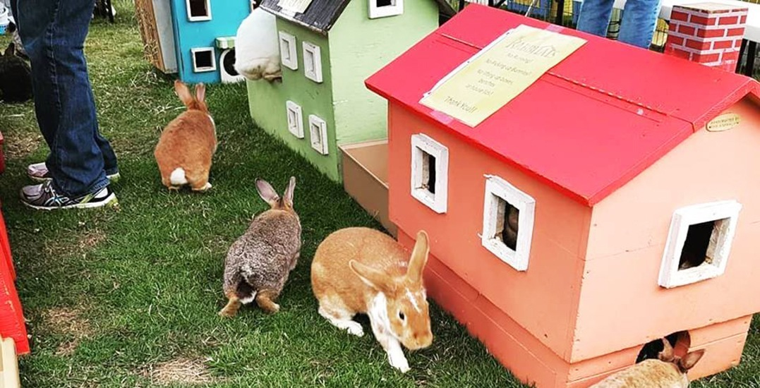 A one-acre rabbit sanctuary is coming to Metro Vancouver