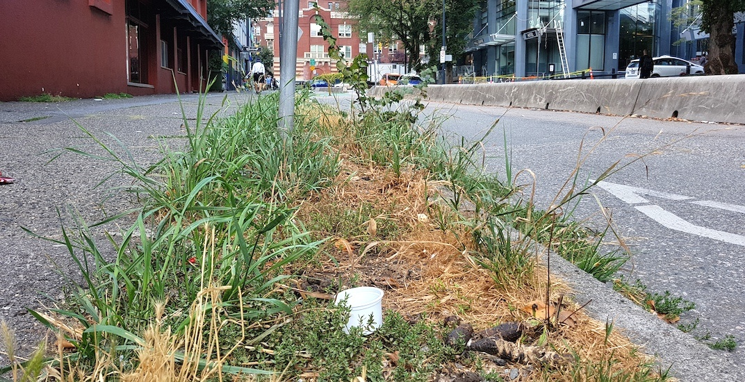 Hundreds of human feces scattered on this Vancouver grass patch