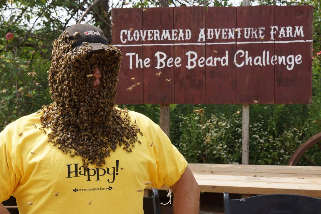 clovermead family farm bees