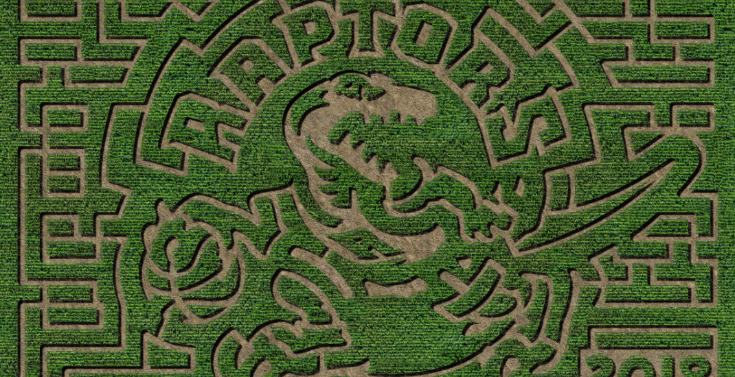 You can now get lost in a Raptors-themed corn maze near Toronto