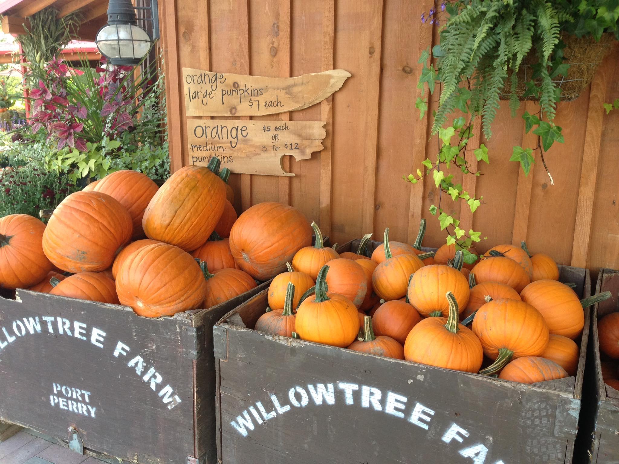 Willowtree farm CSA
