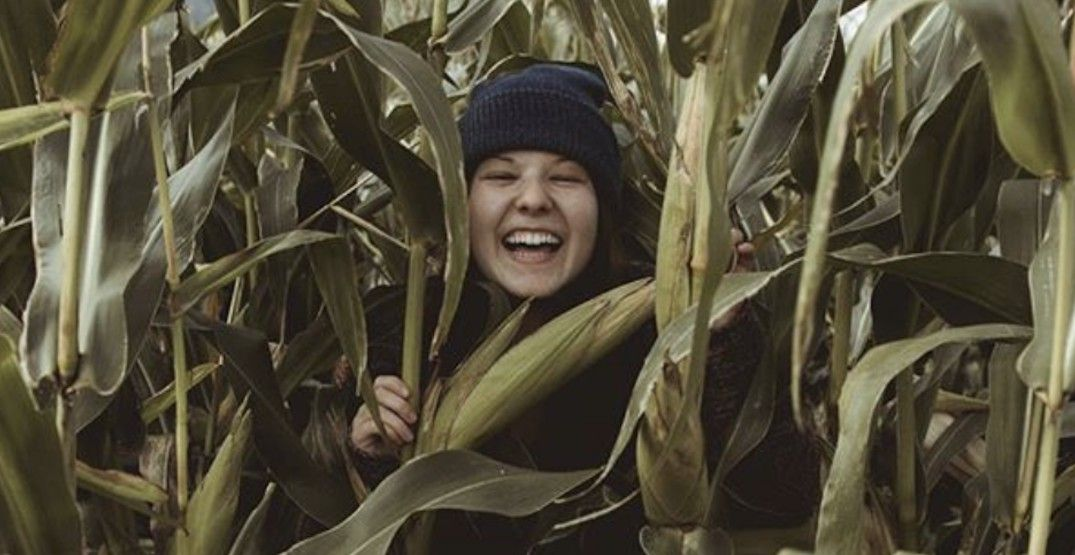 6 corn mazes near Vancouver that need to be on your fall bucket list