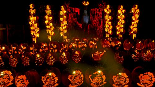 pumpkin pumpkinferno
