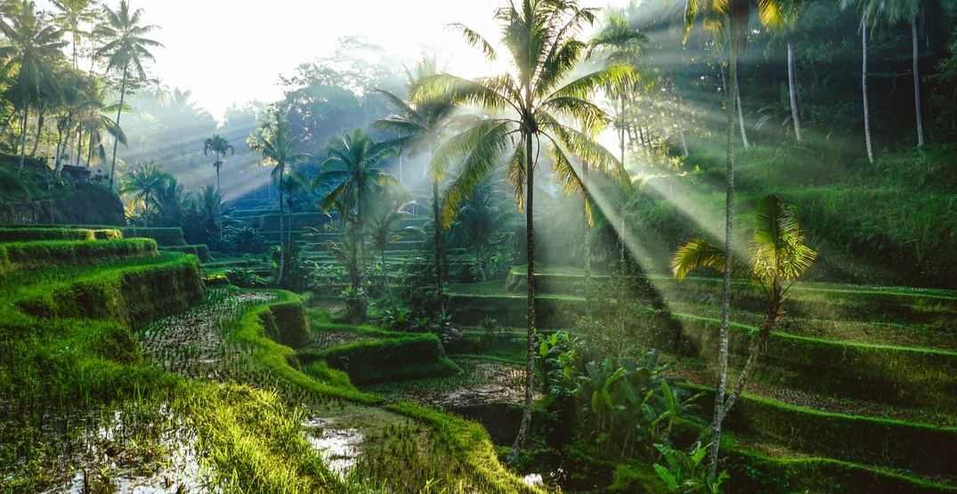 19 things to do when travelling to the magical land of Bali