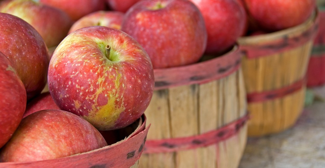 Toronto's autumnal Apple Harvest Festival is arriving this weekend