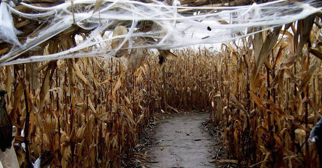 12 a-maze-ing corn mazes to visit near Toronto this fall