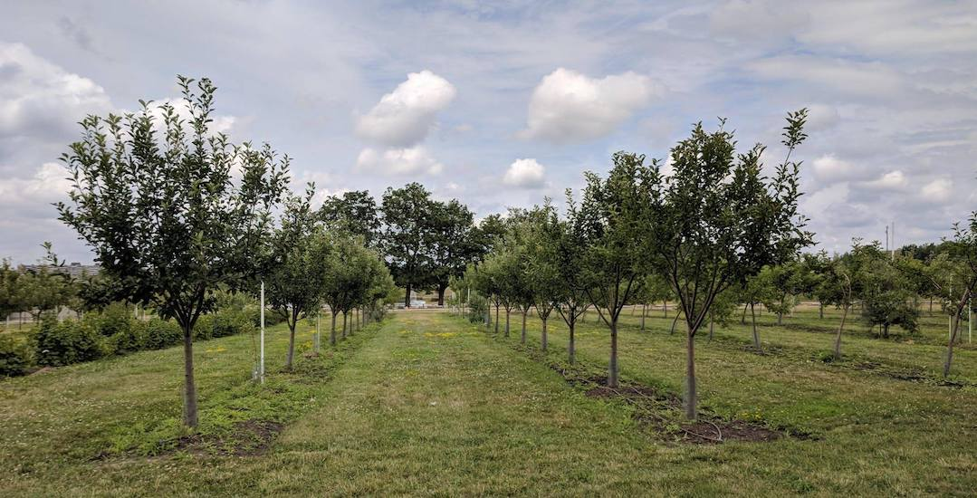 There's a free Orchard Party at a Toronto park this weekend