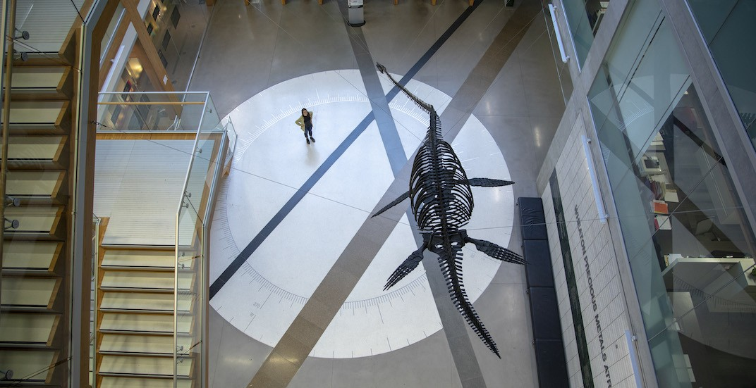 UBC Earth Sciences Building Elasmosaurus