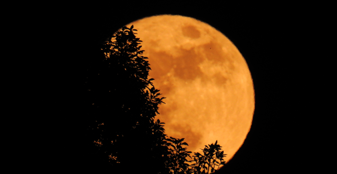 An incredible harvest moon is set to rise over Toronto on Monday