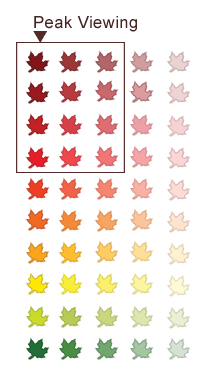 fall colour report