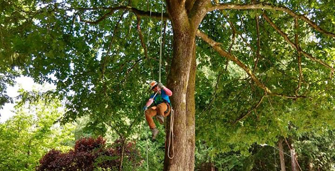 A tree climbing competition is taking over Stanley Park this weekend