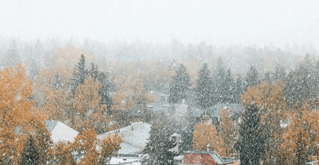 Giant snowflakes were falling in Calgary yesterday (VIDEOS)