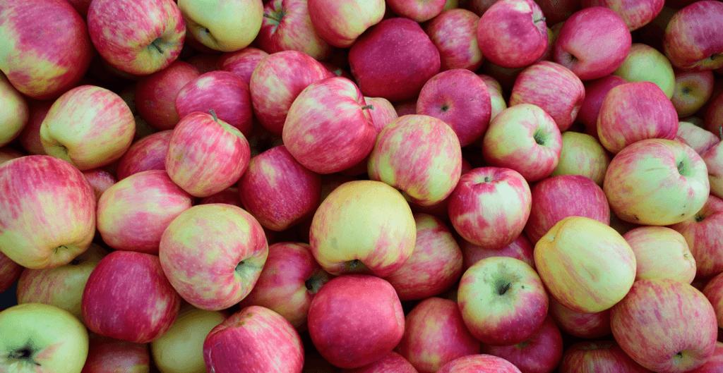 UBC Apple Festival