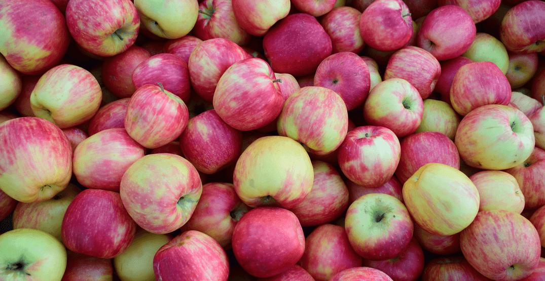 Taste over 60 kinds of apples at this seasonal apple festival next weekend