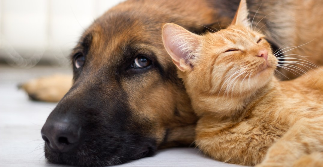 Pets in Calgary are the second most-pampered in the country