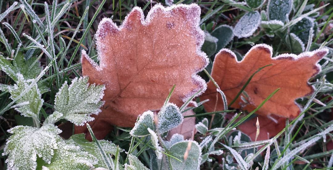 Environment Canada issues frost advisory for Greater Montreal