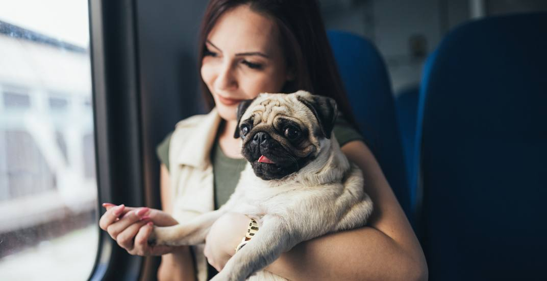 TransLink implored to allow all dogs on transit during non-peak hours