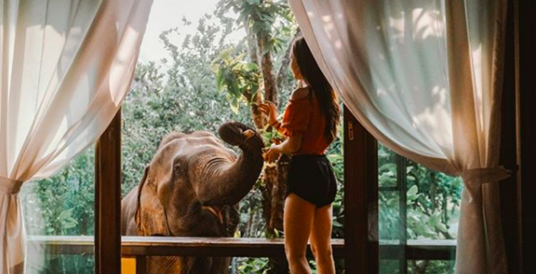 Elephants, waterfalls, and ancient temples: Win a trip to Thailand (CONTEST)