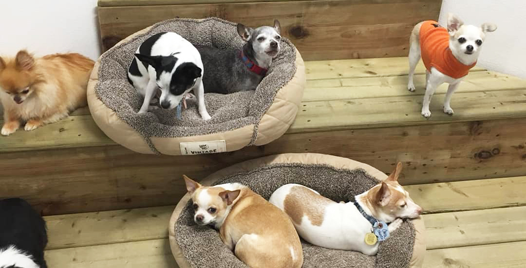 This doggy daycare is offering free pet care on Halloween night