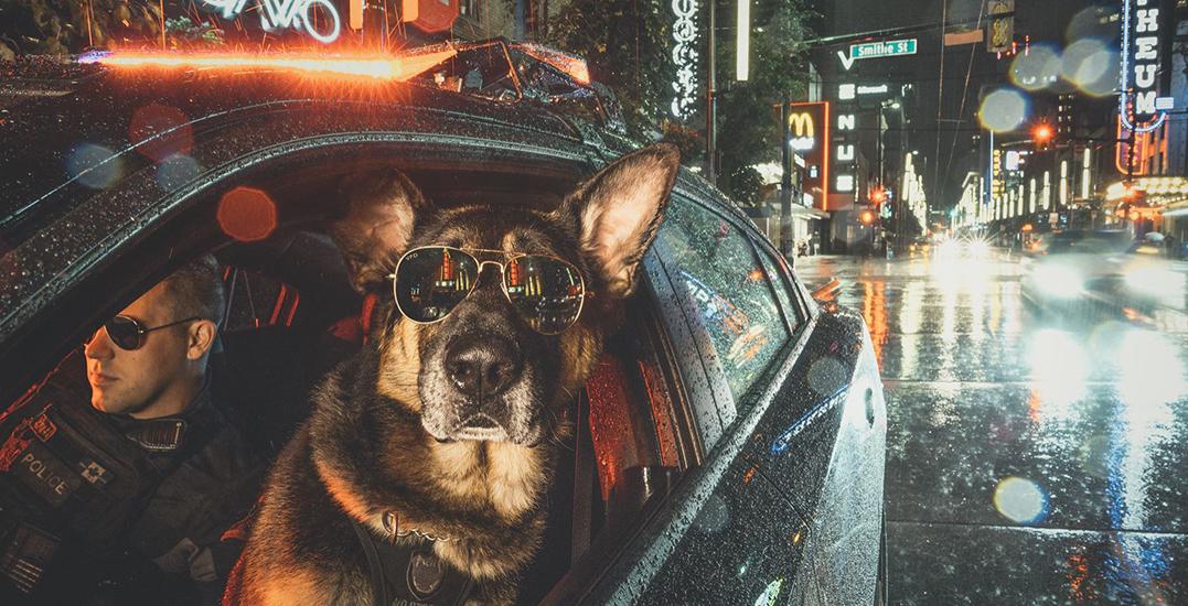 VPD creates hilarious calendar of Vancouver's police dogs (PHOTOS)