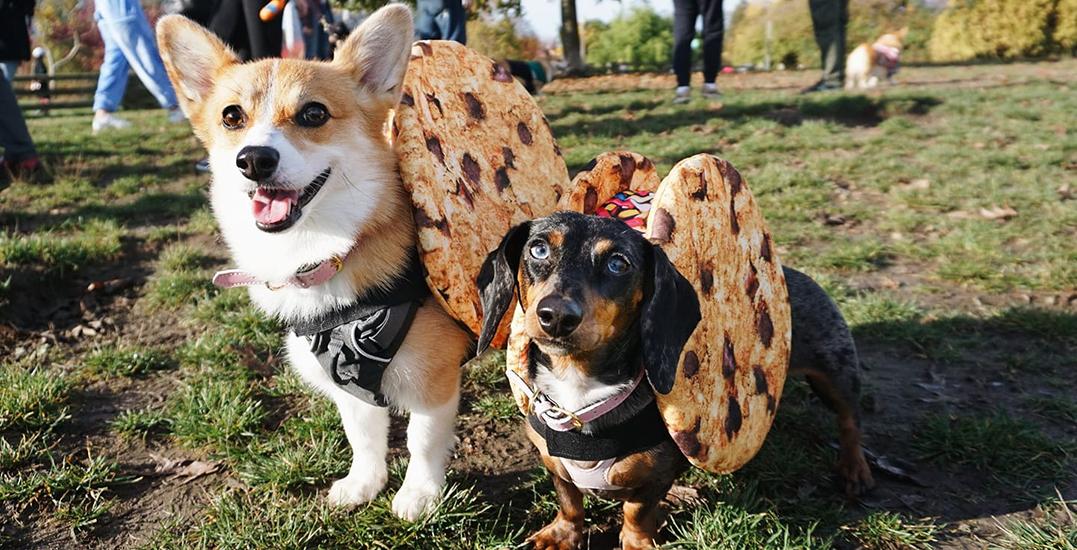 Corgi Halloween parade takes over the Stanley Park Seawall (PHOTOS)