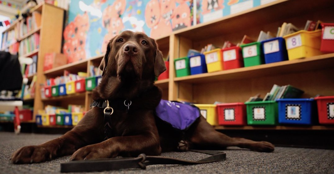 Service animals may be allowed into Ontario schools
