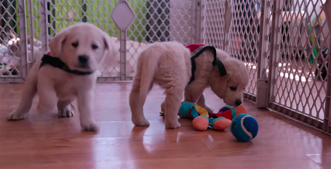 Netflix releases heartwarming 6-part documentary series on dogs (VIDEO)