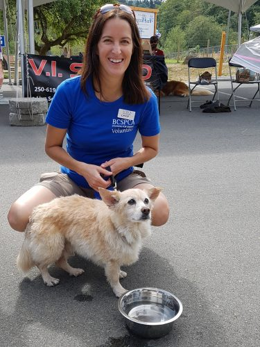 Rascal at this year's Paws for a Cause charity walk (BC SPCA)