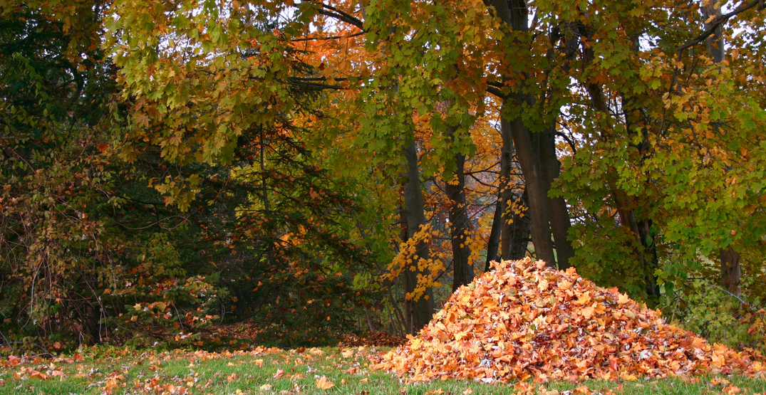 You'll want to think twice before raking your leaves this fall