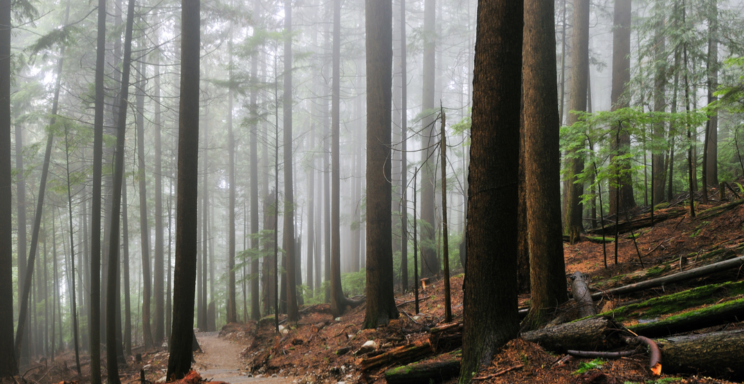 Grouse Grind trail set to reopen in time for the weekend