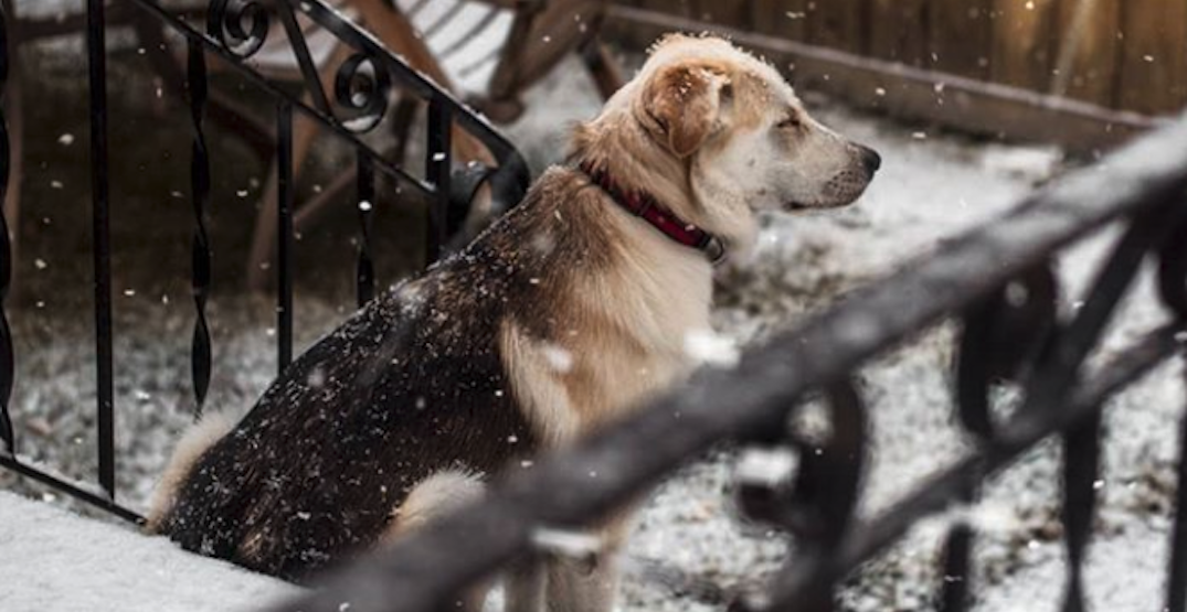 There's more snow on its way to Calgary (PHOTOS)