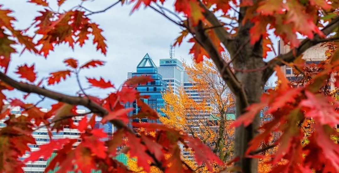 23 things to do in Montreal this weekend: November 9 to 11